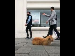 Один день из жизни уличного котика 