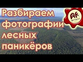 Разбираем фотографии лесных паникёров