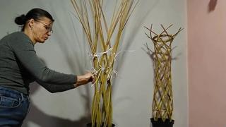 Мастер-класс по посадке и формированию плетеного дерева из ивового прута