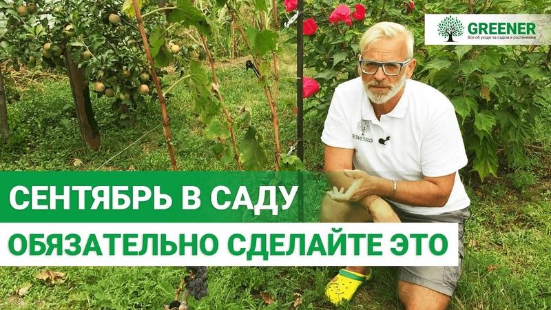 ВАЖНЫЕ САДОВЫЕ РАБОТЫ В СЕНТЯБРЕ Советы опытного садовода