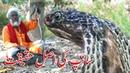 Saap Aur Sapera Saanp Sapera Khel Cobra Snake Story Facts about Snakes by Abdul Majeed Batti