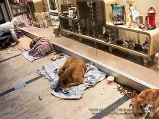 А в Турции, почему то, вообще нет проблем бездомных собак...