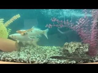 РЕЛАКС — Аквариумные рыбки. (RELAX)