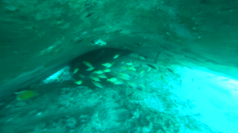 под затонувшим судном спят акулы