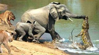 """Хищники атакуют на водопое. Самые эпичные битвы диких животных """"за 5 минут"""""""
