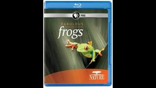 Невероятные лягушки / Fabulous Frogs (2014)