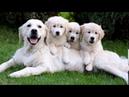Веселые картинки. Забавные и милые собаки и щенки.