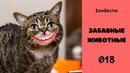 Кошачьи мысли. Коты с человеческим ртом. Приколы с животными / Зубастик подборка 018