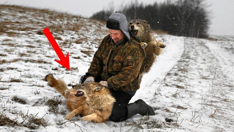 Волки РАССТУПИЛИСЬ перед ним когда увидели что он СДЕЛАЛ с их волчицей и волчонком
