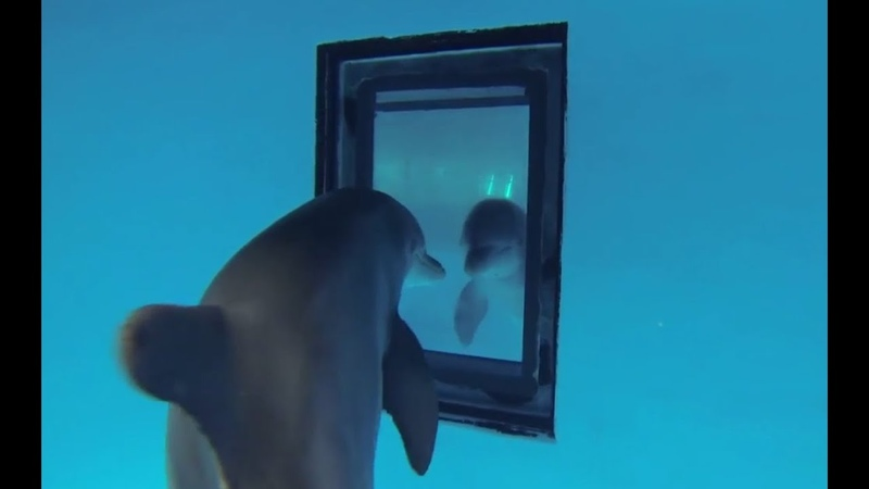 Just how smart are dolphins Inside the Animal Mind BBC