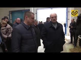 Лукашенко из-за коровы уволил губернатора.mp4