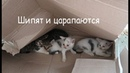 Спасаем уличных котят. Как мы их лечим.
