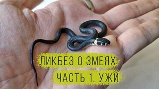 Ликбез о змеях. Часть 1. Обыкновенный и водяной ужи