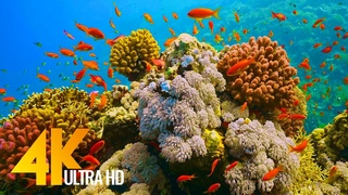 Under Red Sea 4K - Incredible Underwater World - Relaxation Video with Calming Music