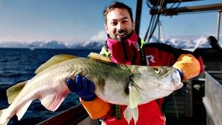 Рыба, которая спасла викингов [Veritasium]