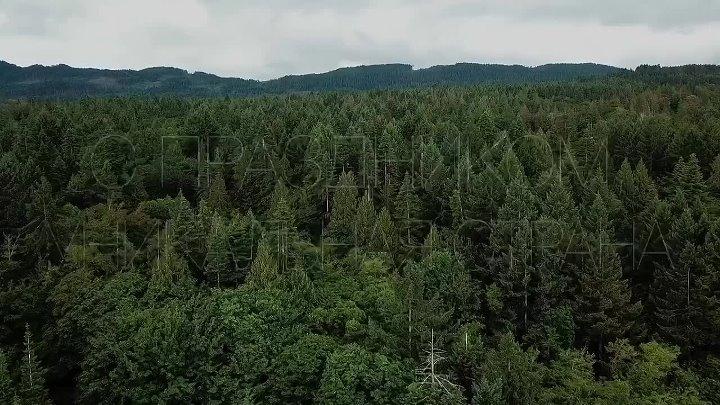 Берега Тихого океана отроги древнейших гор в мире извержение самого большого в мире активного вулкана бескрайние леса высочайшая вершина в Европе с праздником уникальная страна С Днем России