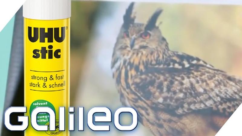 Warum heißt UHU Kleber wie der Vogel 5 Geheimnisse über Klebstoff Galileo ProSieben