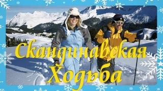 Вот и Зима пришла !Красивое видео картинка отдых зимой ,скандинавская ходьба !Супер отдых в лесу !