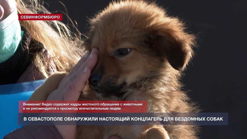 Живые скелеты и трупы щенков в Севастополе проверили приют бездомных животных