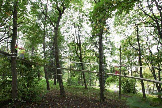 Тропинка в лесу, где растут 300-летние деревья