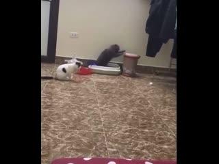 «Мы поставили барабан рядом с кошачьим лотком, и совсем не жалеем об этом»<br /><br />r/#funny