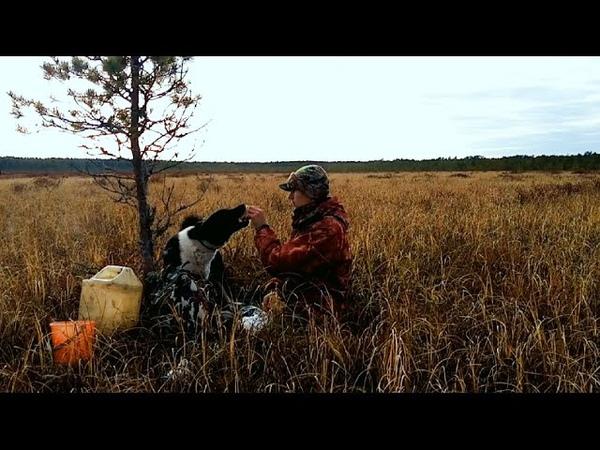 В борах и на болотах Мороженые лисички Работа лайки по пушнине Костромская глухомань Унжа река