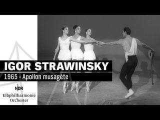 "Strawinsky: ""Apollon musagète""   NDR Elbphilharmonie Orchester"