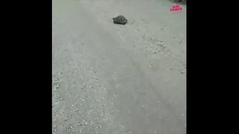 Девушки берегите черепах не давите их своими камазами ☺ @katya na kamaze