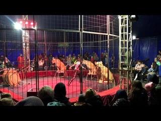 АНО ЦСП «Тэнгу Про» (Боевые искусства) в цирке Шапито «Союз» Мурманск