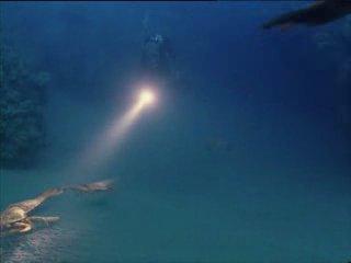 BBC Прогулки с морскими чудовищами 1