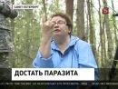 В Петербурге протестировали спецкостюм, защищающий от клещей Репортаж Под Петербургом протестировали специальную одежду, без которой в лес лучше не ходить. Российские производители разработали спецкостюм – он должен на сто процентов защитить от клещей.