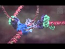 Дрю Берри — Анимация невидимой биологии