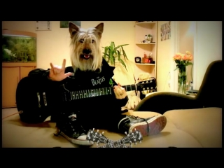 Happy birthday rock song dog playing guitar funny greeting card human dog