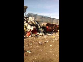 Это видео с работы. Здесь я работаю. Там где окна находится конвейер, где мы сортируем мусор.
