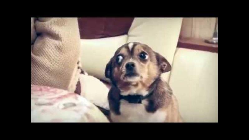 Собака Понимака Собаку Ругают а Она Всё Понимает Это надо Видеть