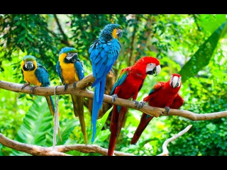 Most Beautiful Parrot - Pretty Scarlet Macaw | Most Colorful Exotic Bird Pets