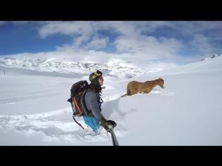 Gopro chilean horse rescue