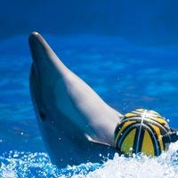 Дельфин Шкипер