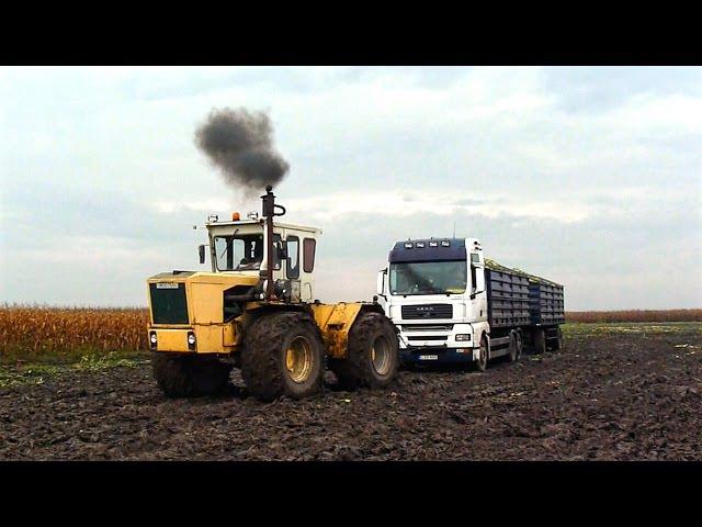 Csemegekukorica betakarítás 2. (Sweet Corn Harvest) Rába Steiger 250