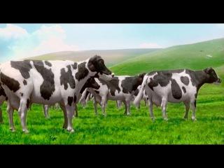 Sütaş - Dans Eden İneklerle 41. Yıl Şarkısı Reklamı (Candan Erçetin Tütü Maşallah)