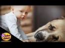 Copii si Caței Adorabili - Compilație Amuzanta si Draguța