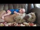 Собака и Ребенок это жизнь Игра Престолов отдыхает