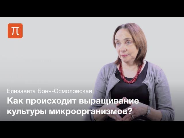 Культивирование микробов Елизавета Бонч Осмоловская