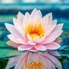 Йога Юнион ॐ YogaUnion, йога центр в Озерках