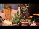 Видео-прогулка по мини-гостинице-1 (пер.Калинина, 10), г.Феодосия, Крым