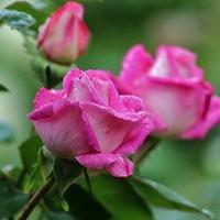 Мухаметьянова Роза