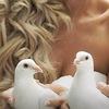 Свадебные голуби на свадьбу в Екатеринбурге