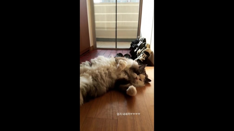 180624 180629 Riu Hyeontae InstaStory cat Woori