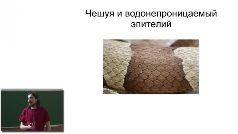 Основы биологии (24). Metazoa (5). Четвероногие позвоночные животные.