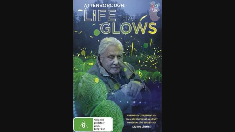 BBC Живой свет с Дэвидом Аттенборо Биолюминесценция BBC David Attenborough's Light on Earth Life That Glows 2016
